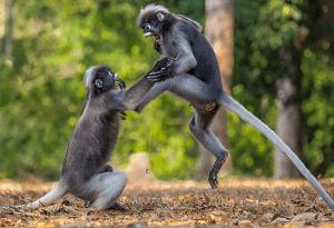postura kung fu estilo animal mono